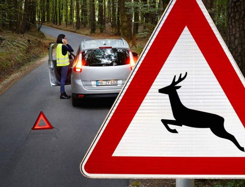 Wild Unfall so verhalten Sie sich richtig